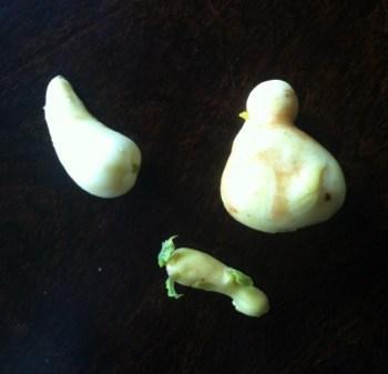 Potatis i roliga former