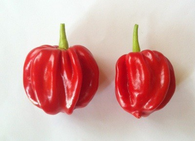 Scotch bonnet chili