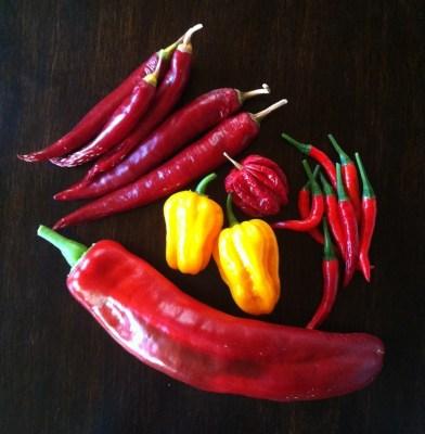 Blandad chili. Spetspaprika, Scotch bonnet,