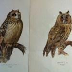 Fågelbilder från von Wrights bok