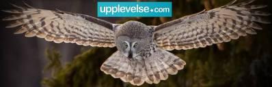 Lappugglesafari från Upplevelse.com, bild publicerad med godkännande av webbsidan
