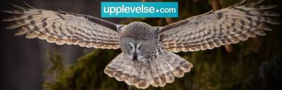 Lappugglesafari från Upplevelse.com