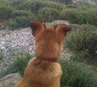Hund  på promenat på berget