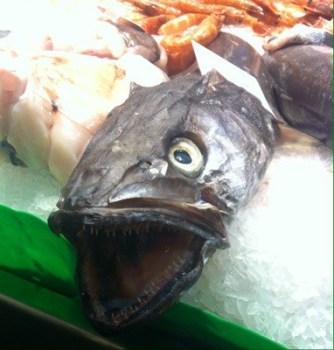 Ful fisk. Inte längre hemlös!