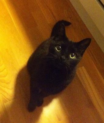 Min svarta katt Bacon