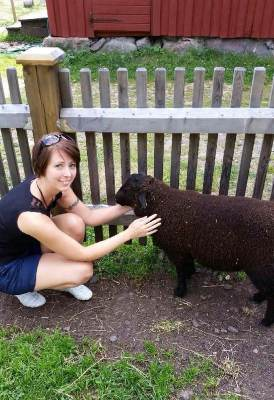 Arga Klara klappar ett får på en 4H-gård