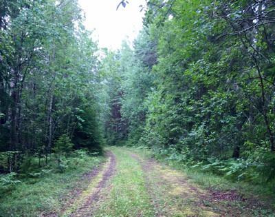 Sovplats i skogen på roadtrip