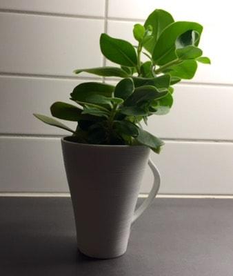Grön växt i mugg. Har planterat om blommor.