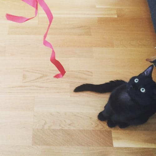 Svart kattunge leker med snöre, Finkel