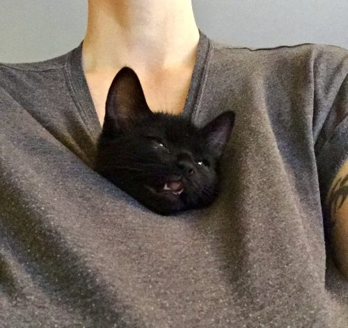 Svart kattunge i tröja, Finkel. Liten kattunge.