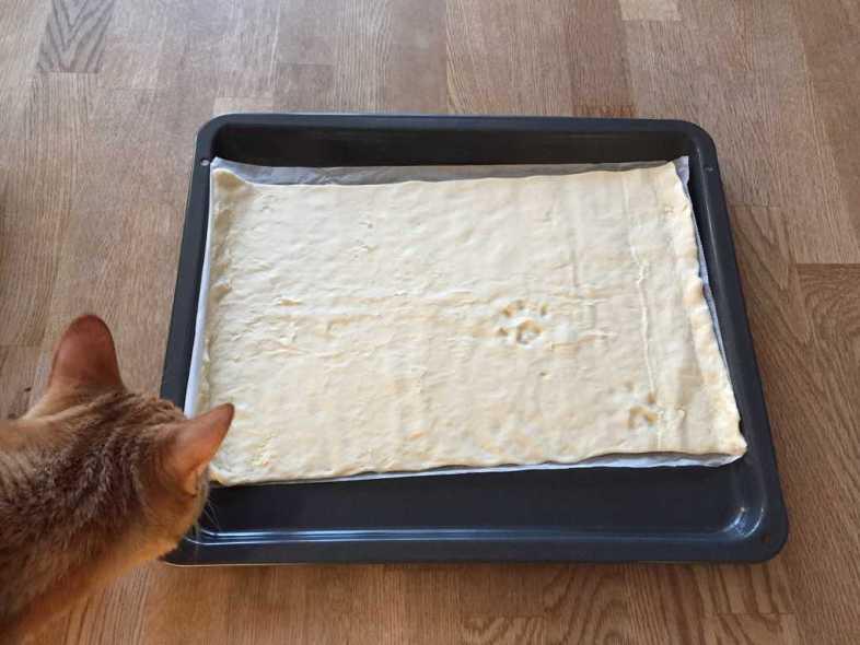Katt och tassavtryck i pizzadeg. Gå inte i maten.