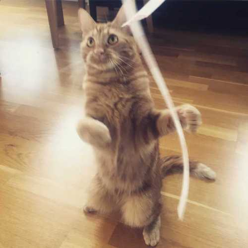 Orange katt dansar, Fjodor