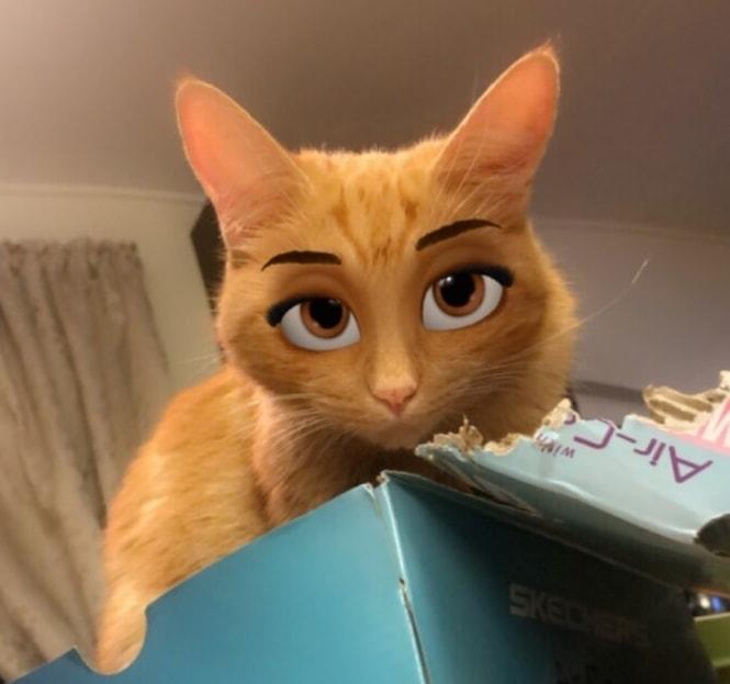 Katt med snapchat-filter