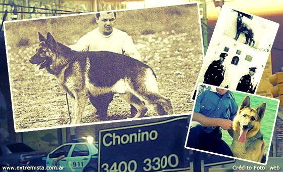 chonino-2