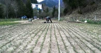 Încă 100 de hectare vor fi împădurite, în Munții Făgăraș