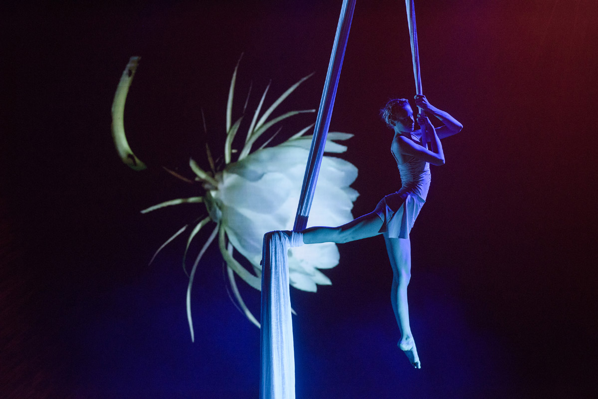 Aerial Silk Dancer - Argolla Show