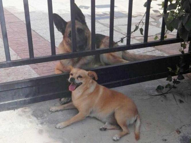 perros amolr