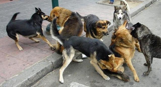 perros jauira