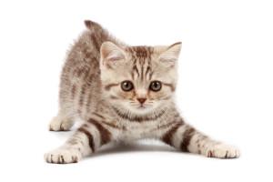 Симптомы и способы лечения эндометрита у кошек