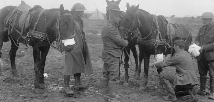 The Battle of the Somme, July-november 1916 British troops applying bandages to wounded horses, October 1916. (Credits: Imperial War Museum)