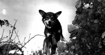 Chips - Most decorated dog of World War II. (Credits: U.S. National Archives)