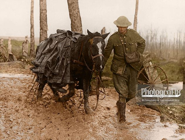 Horse laden with trench boots on the Somme Front.