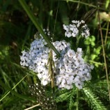 yarrow heard me talking about it the other day ;)