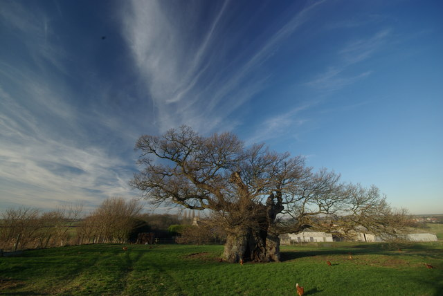 The Oak – Its durability will be tested