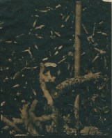 tirage cyanotype papier japonais 30g 13 avr.15