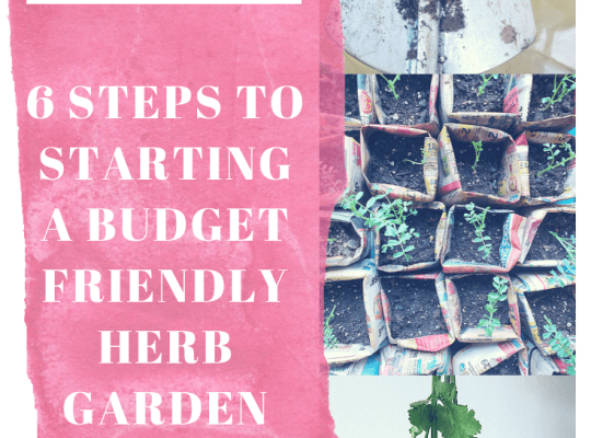 How to Start a Budget Friendly Herb Garden by Ariana Dagan