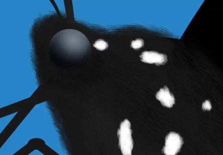 1-mariposa-azul