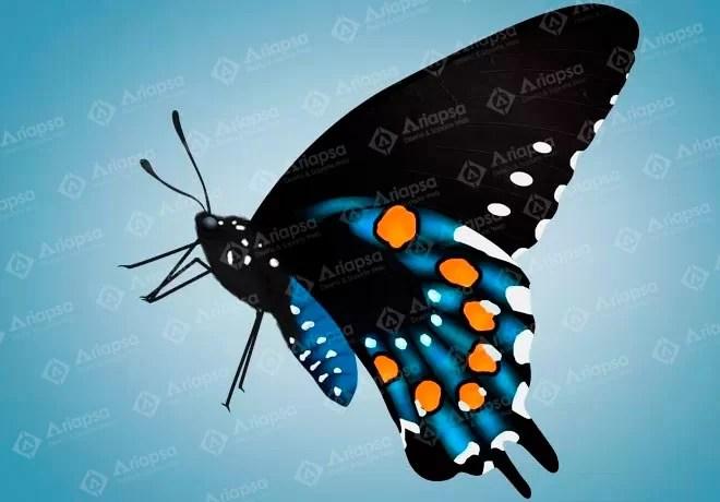 mariposa-ariapsa-mexico