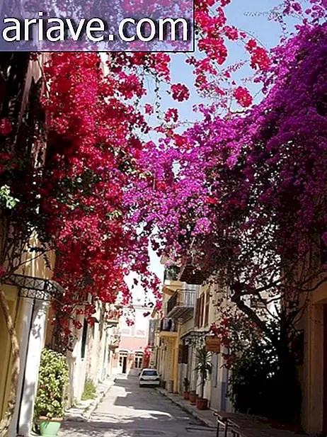 Bunga Paling Indah Sedunia : bunga, paling, indah, sedunia, BUNGA, MANA-MANA:, LIHAT, JALAN, PALING, INDAH, DUNIA, PENDIDIKAN