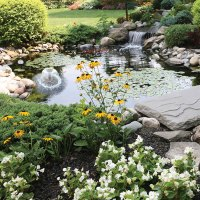 Cheap Backyard Pond Kits  Design and Ideas