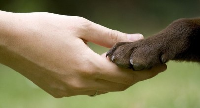 A person holding a dog's paw in their hand.