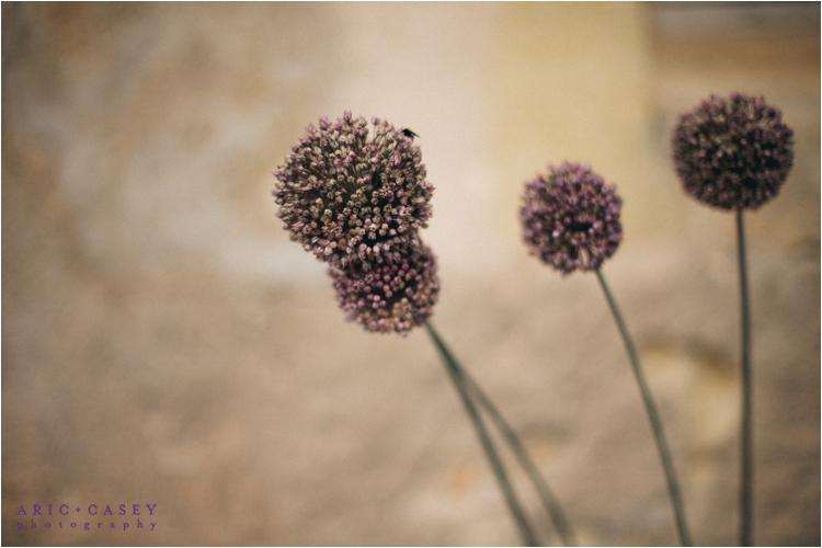 France summer wildflowers