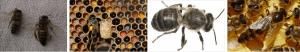 Arı Felci, Arı Felci Nasıl Anlaşılır ** 2020