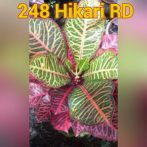wpid-img_20150705_46923.jpg