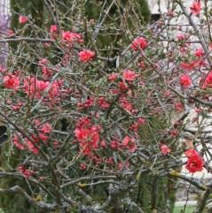 Neighbours Pin Tree S
