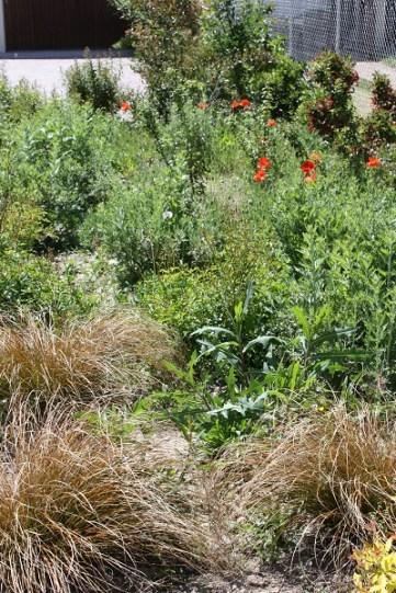 Aulos garden with weeds S