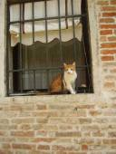 This Italian cat can spot a tourist.