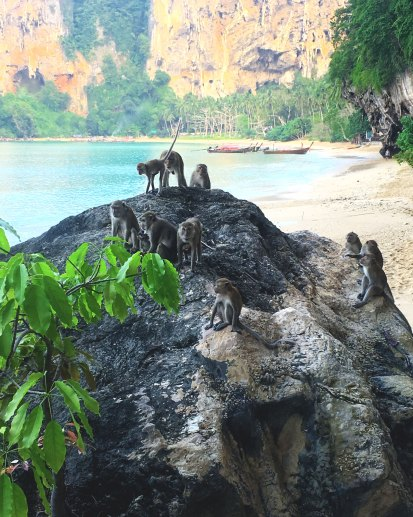 Monkeys reign on Tonsai Beach