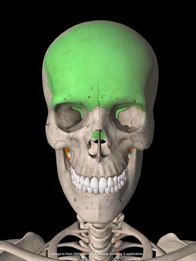横須賀整体小顔矯正 前頭骨