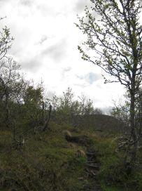 Bergsete opp Kvannaskard-036