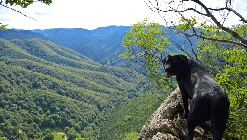 A dog on the green hills of Transylvania, Romania. Traveling around Europe with a dog.