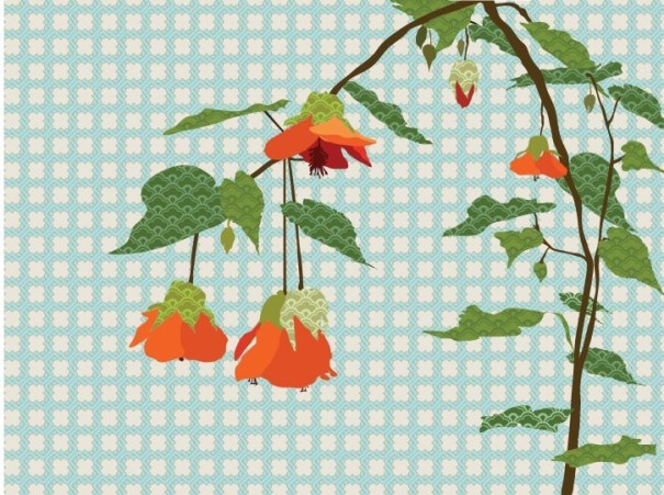 Flowering Maple Abutilon