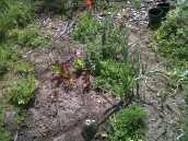 ZTL garden
