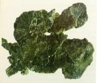 Fragment G