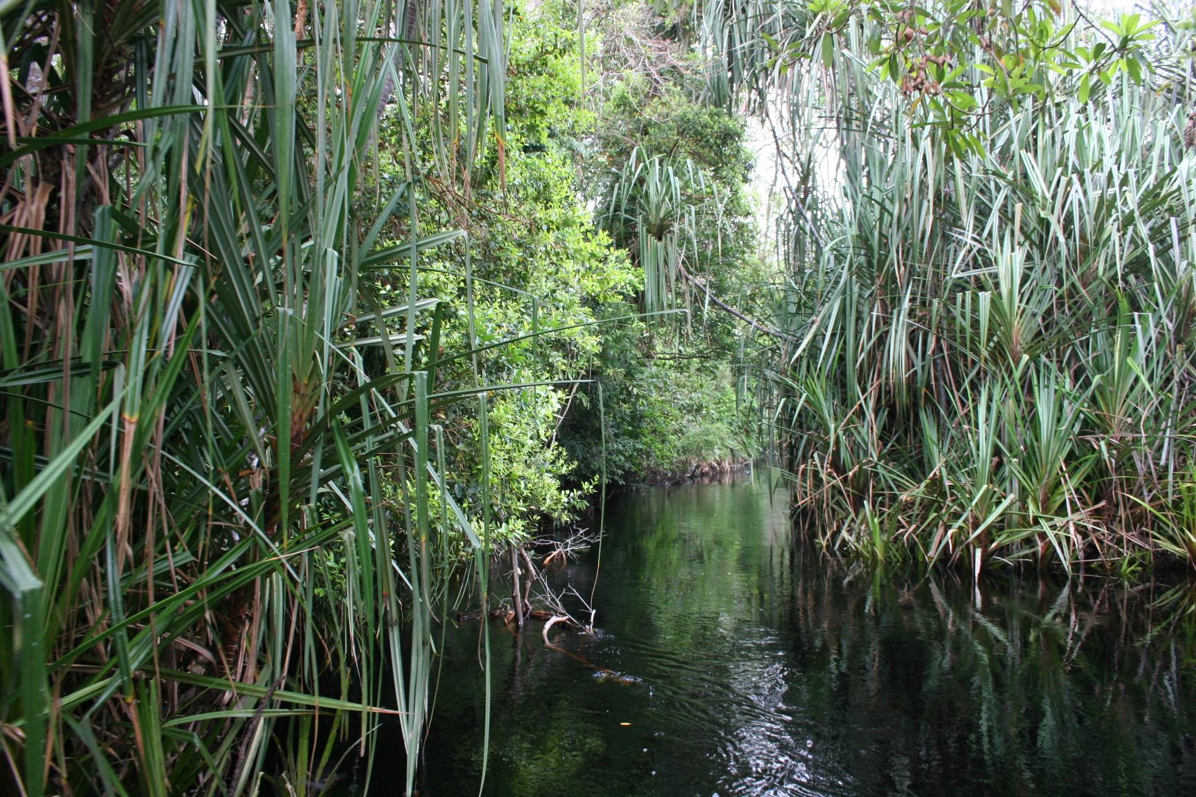 hutan rawa senepis  Berbagi Ilmu