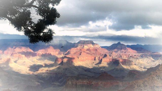grand canyon grandcanyon national park usa arizona las vegas nevada america a river of roses ariverofroses